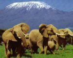 Кения, Нациаональный парк Амбосели