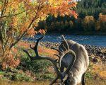 Финляндия, Горнолыжный курорт Саариселька