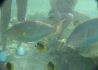 Фото туриста. рыбки и люди