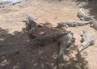 Фото туриста. Крокодиловая ферма