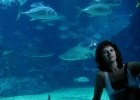 Фото туриста. океанариум в Бангкокке
