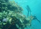 Фото туриста. Под водой около отеля