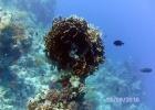 Фото туриста. коралл