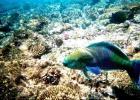 Фото туриста. рыба-попугай