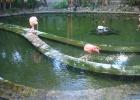 Фото туриста. Фламинго у казино