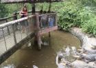 Фото туриста. Ловись, крокодильчик, большой и маленький