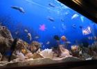 Фото туриста. аквариум в китайском ресторане