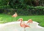 Фото туриста. фламинго
