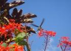 Фото туриста. Краски лета