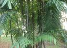 Фото туриста. бамбук