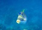 Фото туриста. Рыбка Пикассо, оочень смешная!