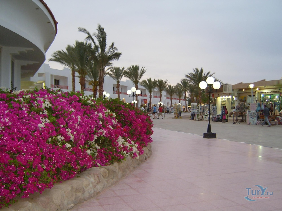 a profile overview of the sharm el sheikh baron resort This feature is not available right now please try again later.