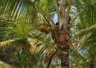 Фото туриста. Кокосовые пальмы