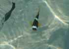 Фото туриста. Рыб можно наблюдать с берега/пирса