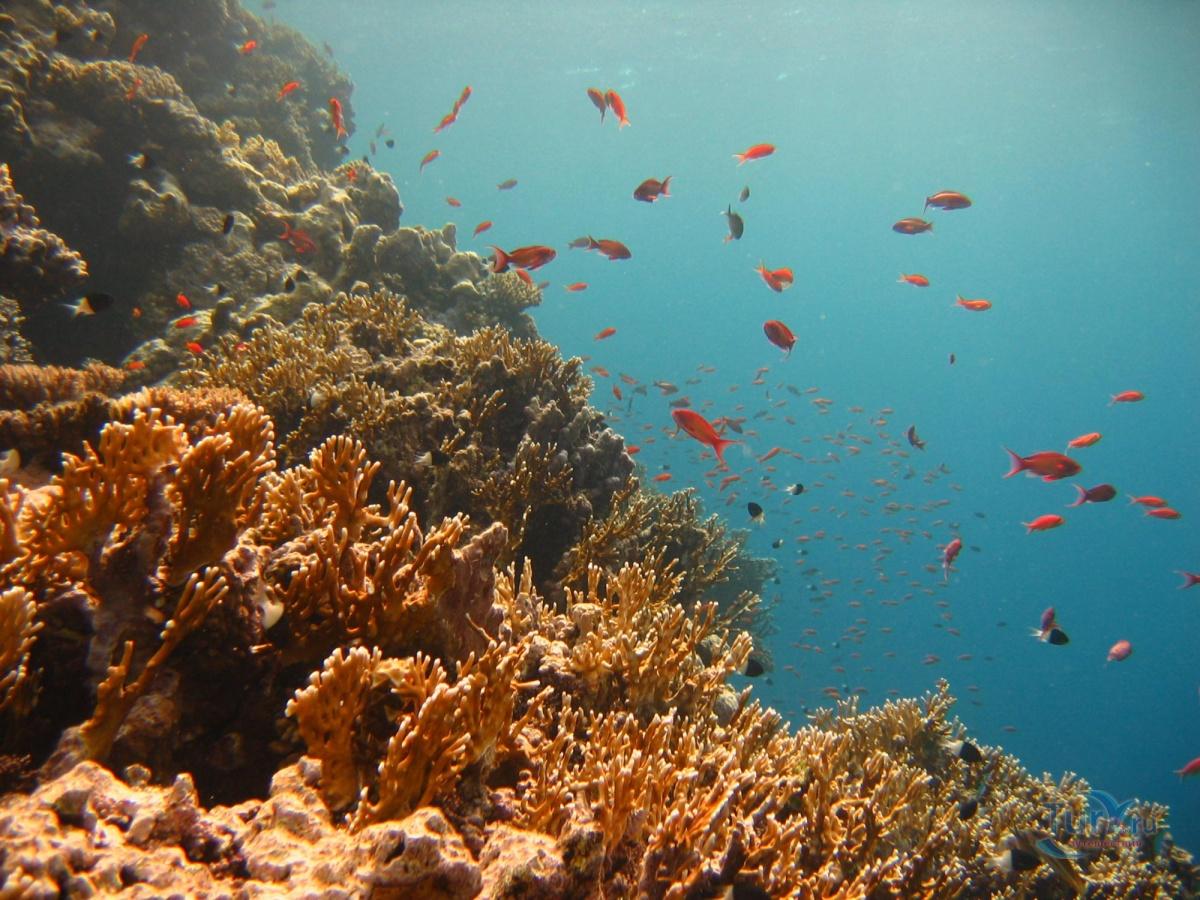 красное море реальные фото туристов