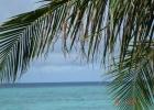 Фото туриста. наша пальма около номера)