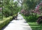 Фото туриста. дорога к морю через парк