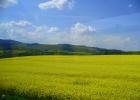 Фото туриста. Чехия, весна, репсовое поле