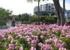 Фото туриста. Цветы