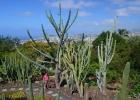 Фото туриста. Кактусы в Ботаническом саду