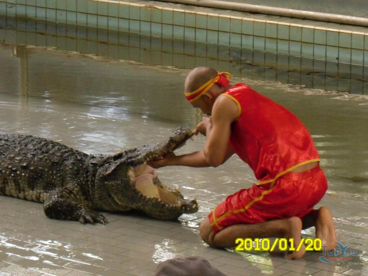Фото с крокодилом афоризмы какого фига