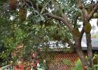 Фото туриста. хлебное дерево