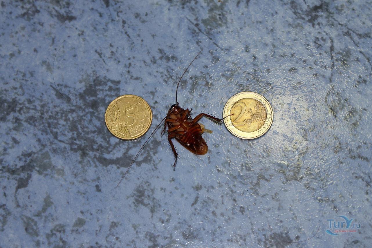 необычных тараканы на кипре фото туристов связи