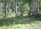 Фото туриста. буйвол в джунглях