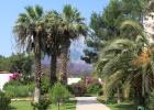 Фото туриста. пальмы на территории
