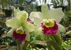 Фото туриста. Тропический сад Нонг Нуч