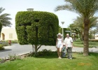 Фото туриста. Дерево