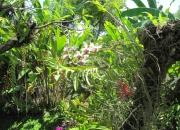 Индонезия. «Парк экзотических растений на о. Бали»
