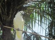 Индонезия, о.Бали. «Экскурсия в парк птиц и рептилий.»