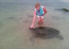Фото туриста. Черепахи приплывают каждый день в лагуну возле Чая Транс