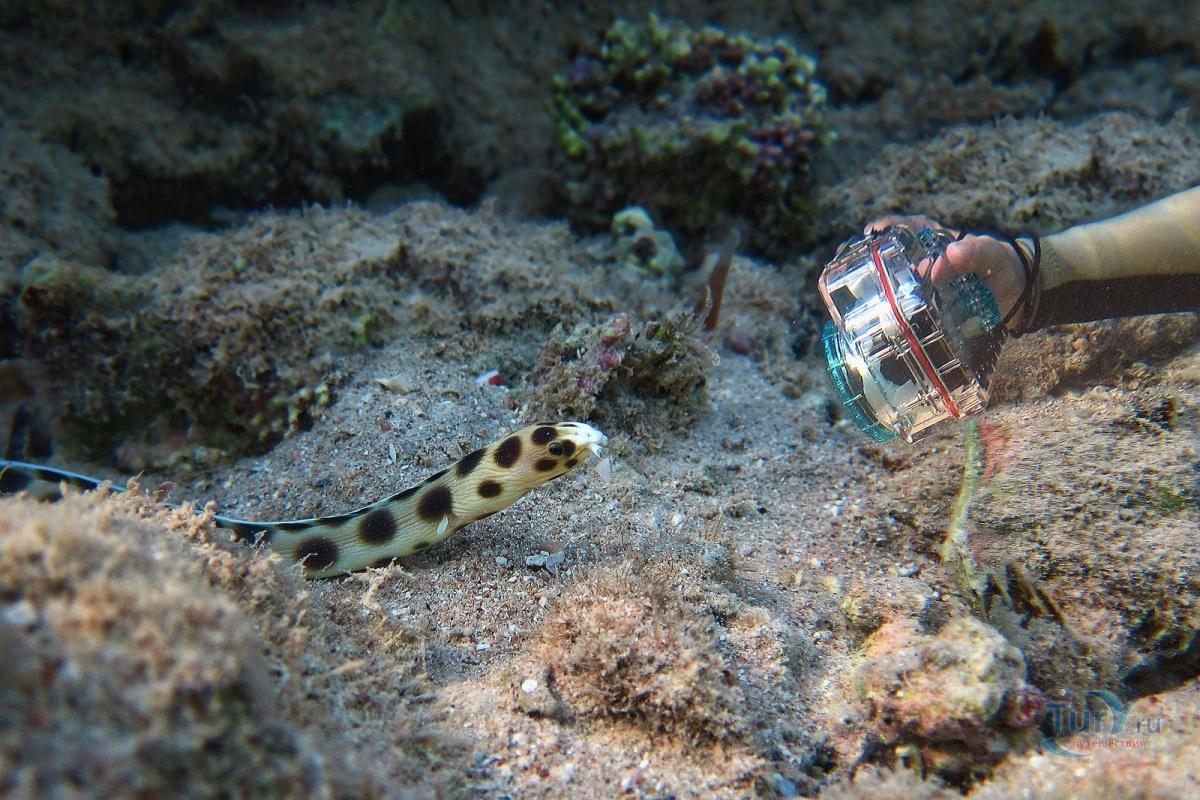 морские змеи египта фото