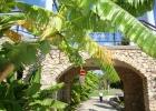Фото туриста. Банановые цветы в отеле