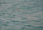 Фото туриста. Морская корова