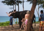 Фото туриста. Старший слонёнок