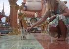Фото туриста. Храм на обзорной экскурсии