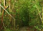 Фото туриста. джунгли Панамы