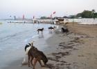 Фото туриста. Dog beach