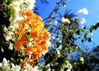 Фото туриста. красивые цветочки