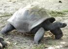 Фото туриста. Черепаха