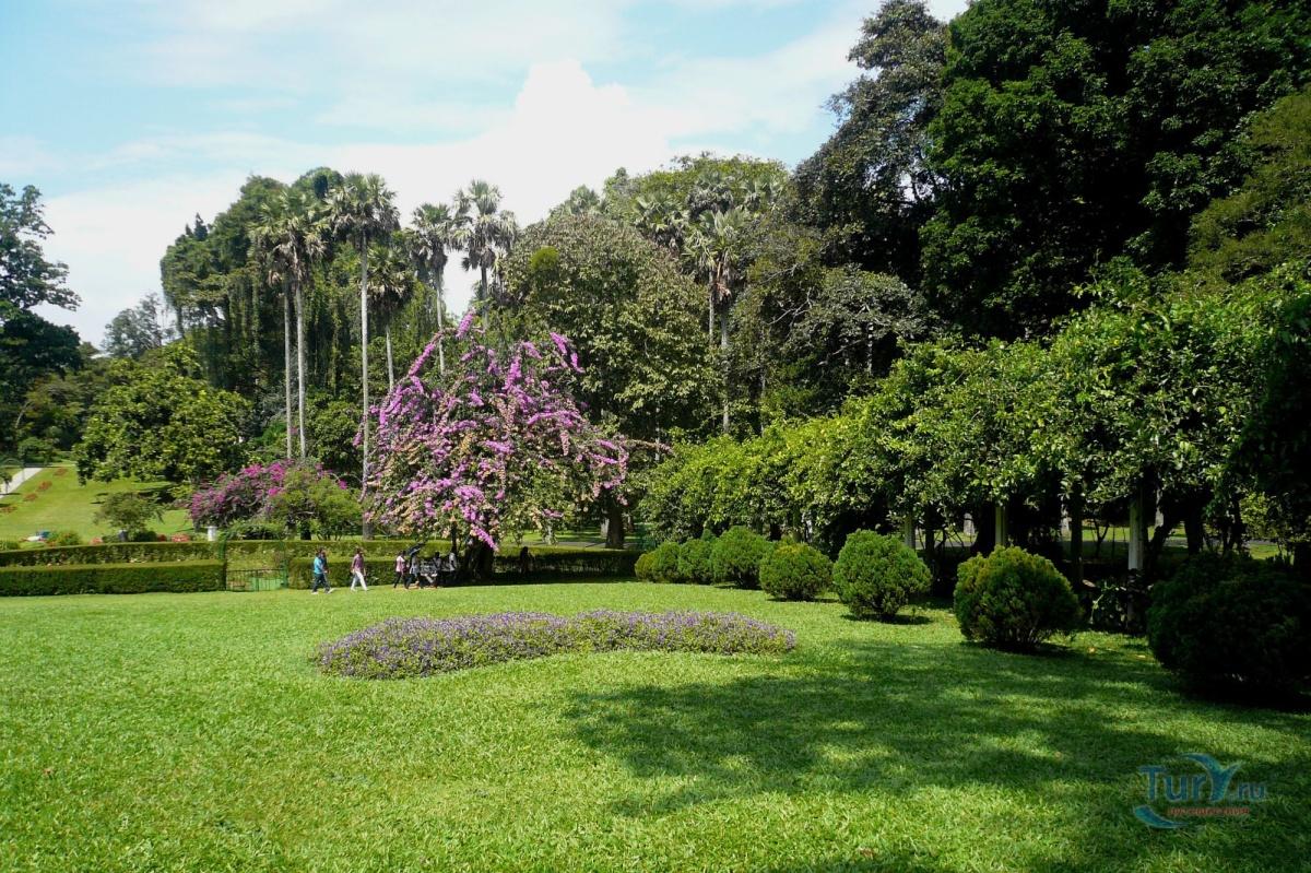 Sri lanka peradeniya park xxx