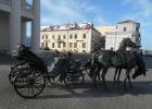 Фото туриста. Лошади у ратуши.