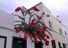 Фото туриста. На улочках Пунта Брава (Punta Brava)