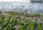 Фото туриста. Те самые водоросли
