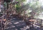 Фото туриста. Tea Garden