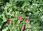 Фото туриста. Цветы в Захабии всегда...и везде !