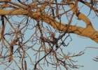 Фото туриста. Птиц притаился на дереве.